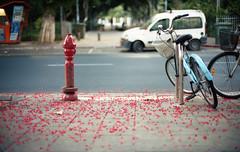 Tel Aviv Red