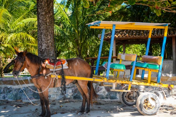 Horse Carriage Morro de Sao Paulo 4 Reasons You Need To Visit Salvador, Brazil