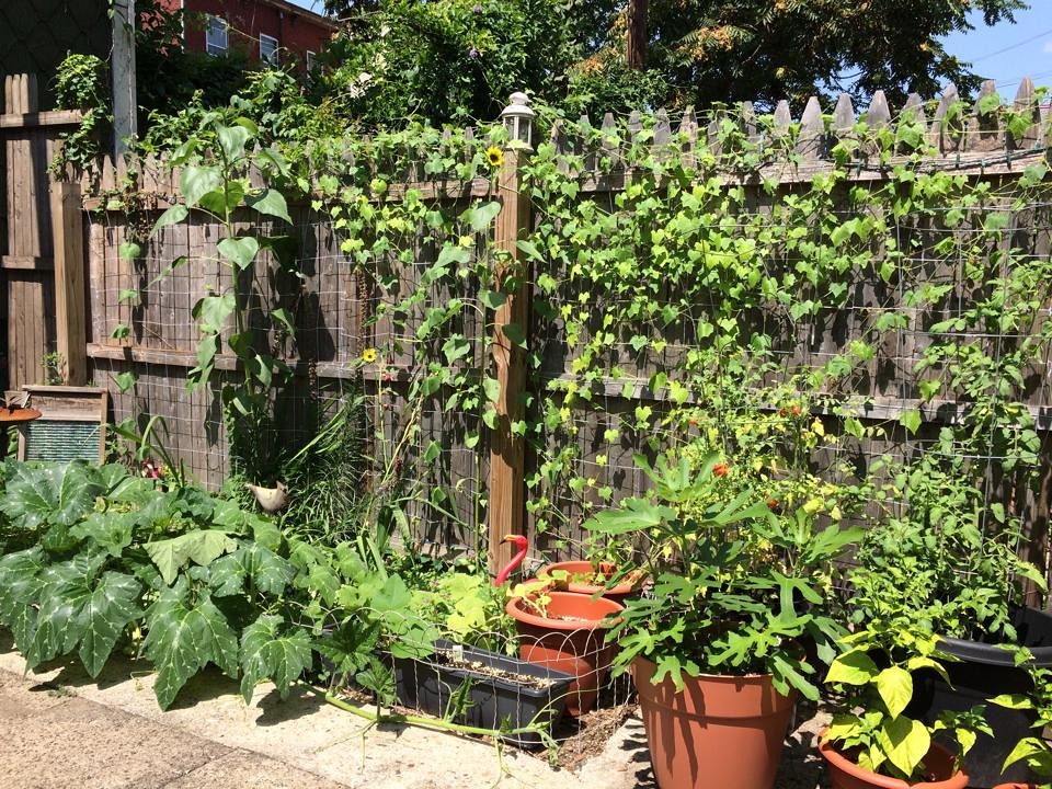 My former garden in Williamsburg, Brooklyn