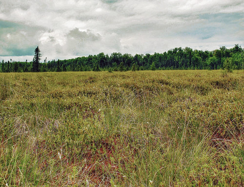 Springstead Muskeg State Natural Area