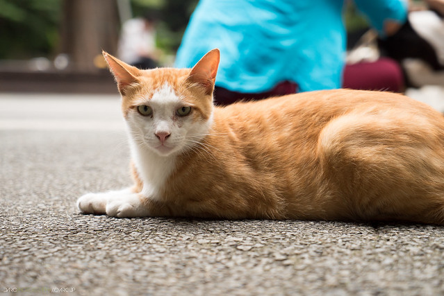 Tokyo Cats - Sony a7S