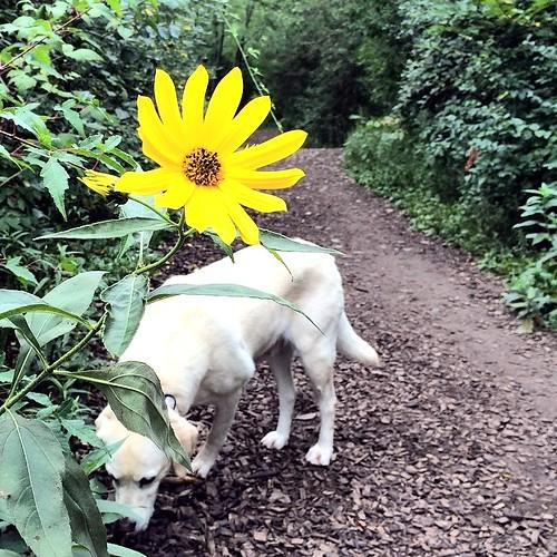 A flower over Daisy-2