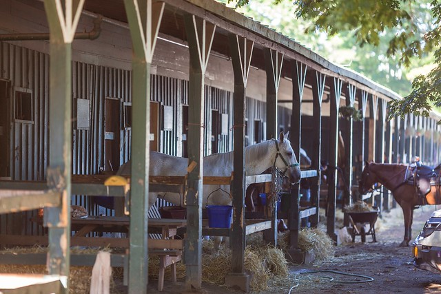 Horses in Stables at the Back Stretch