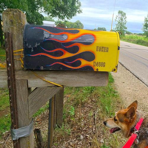 #ecker #mailbox #rural #dog #flames #art #kitsch #country