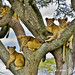 Family Tree by Paul Bruner Photography