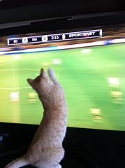 Valencia watches football