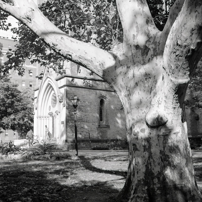 Tree in Churchyard