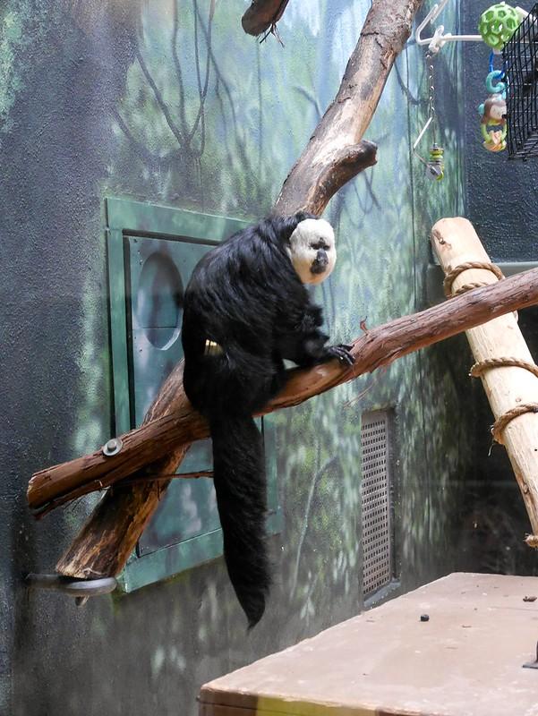 USA Trip Philadelphia Zoo Day Four