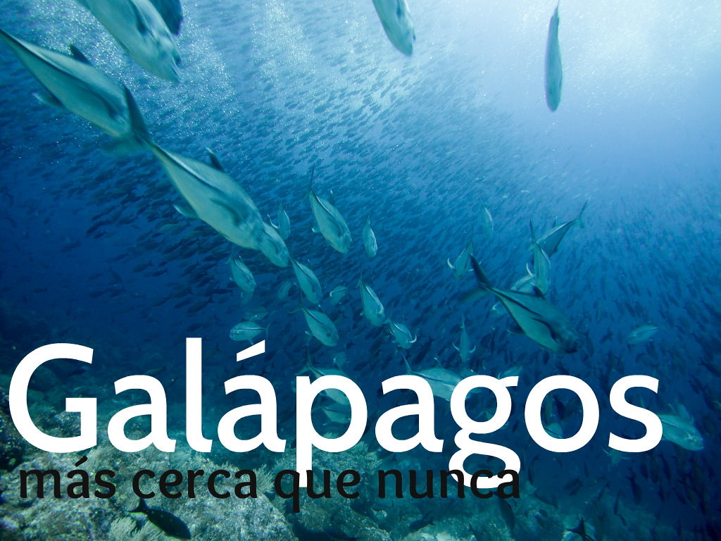 Viaje buceo galápagos