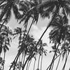 #srilanka #bentota #holiday #summer #blackandwhite #2014