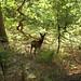 bracknell deer