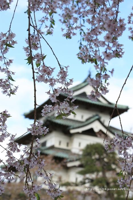 20140502_AomoriSakura_1900 ff