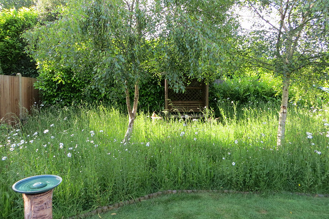 Meadow June 2014 3
