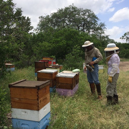 Comanche Creek bee yard June 2014