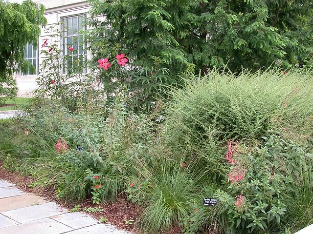 Urban Bird Habitat Garden