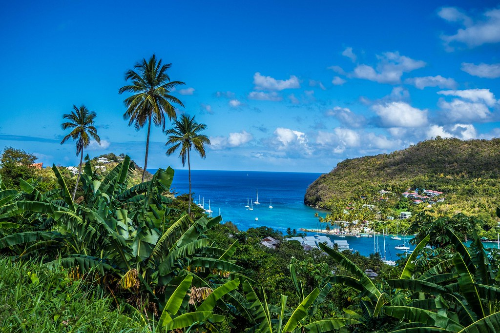 Palms above Marigot Bay