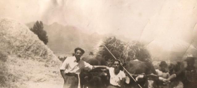 1953 trilla en Copacavana, por el camino de tres esquinas, cerca de Pucón