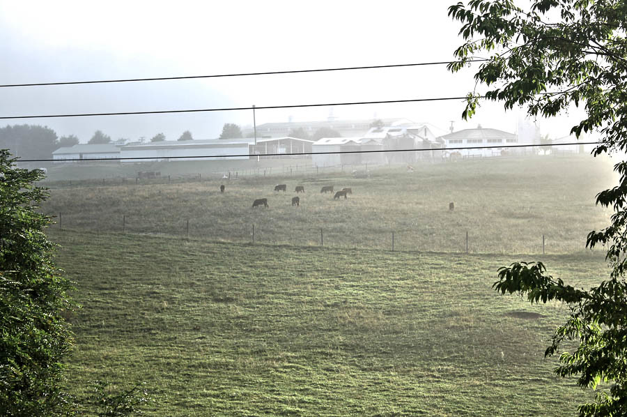 Field sunrise outside virginia cows july va hdr 26th blacksburg 2014