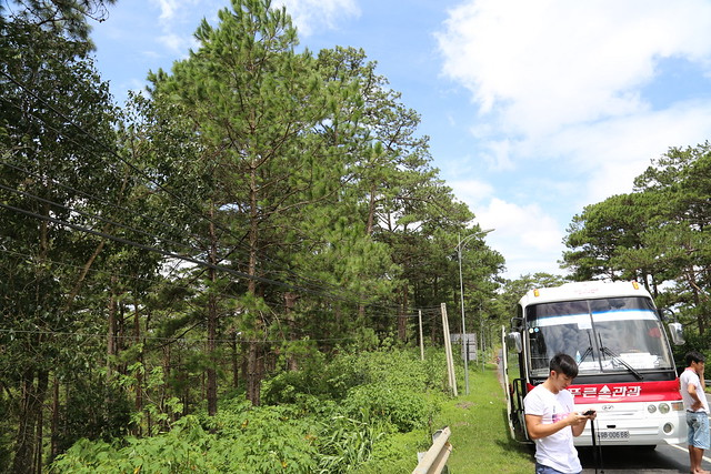 There's a half hour ride to the city of Da Lat from the airport, passing by nice pine trees