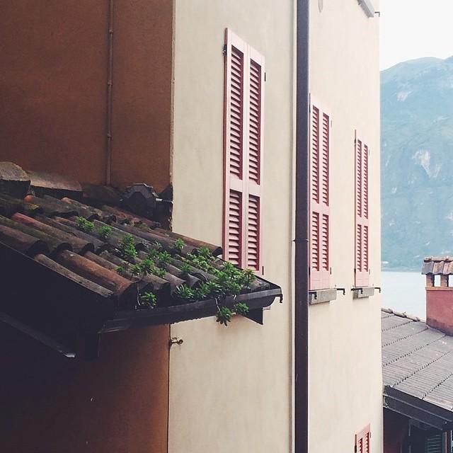 Baby pines #varenna #italy
