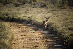 Samara Eastern Cape Karoo