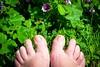 Paresse Estivale / Summer Laziness