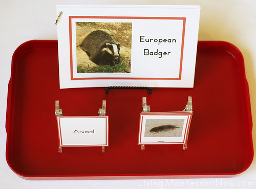 Plant and Animal Sorting Plus European Badger Booklet