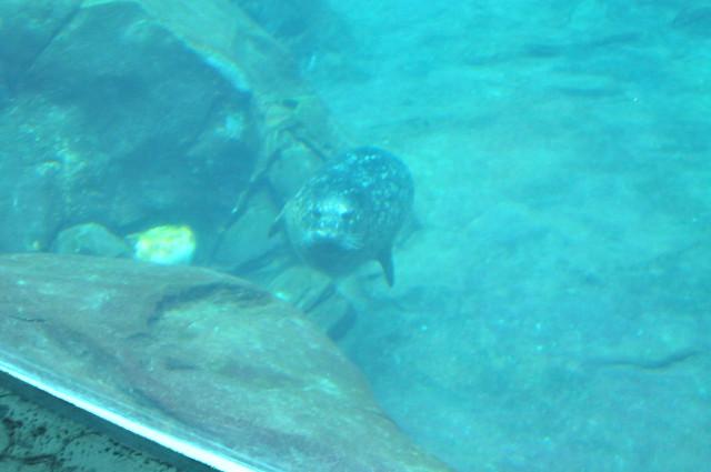 23_Georgia Aquarium