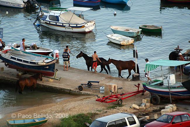 Caballos en el puerto. © Paco Bellido, 2008