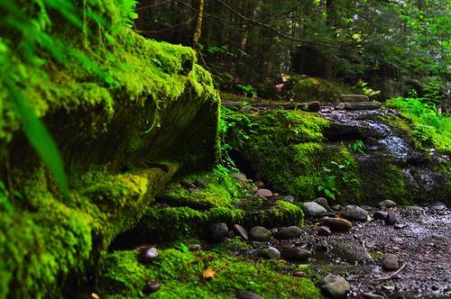 photography moss greatphoto