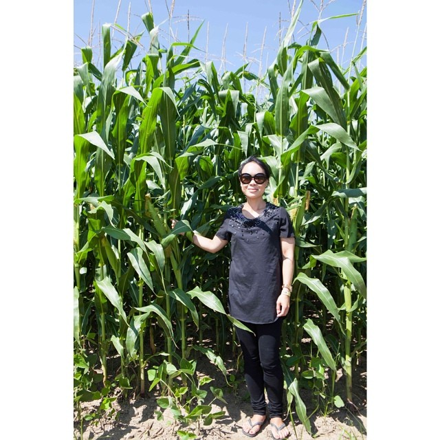 City girl (moi) meets tall field corn in #FingerLakes #flxperience