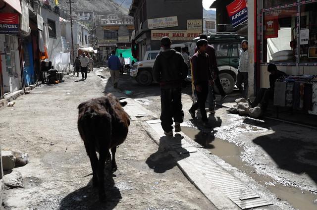 Leh, Ladakh, 11 Aug 2014. L126
