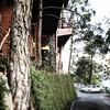 #bell at pine drive, Barog.