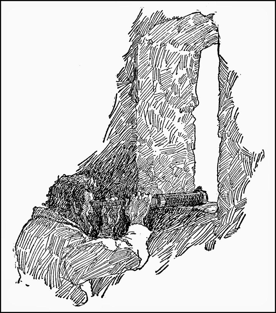 WyethN81