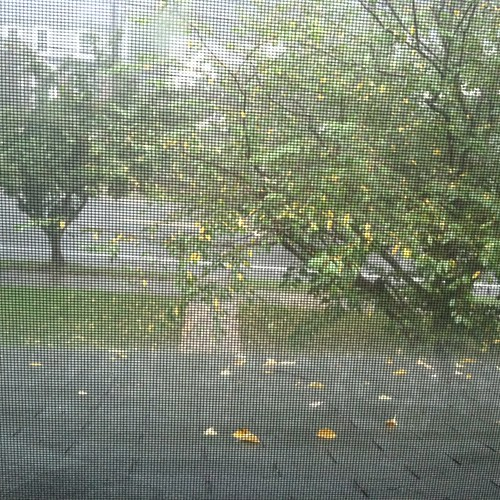 sudden dimness and sweet, sticky cool of summer rain rushing in as thunder purrs in the distance