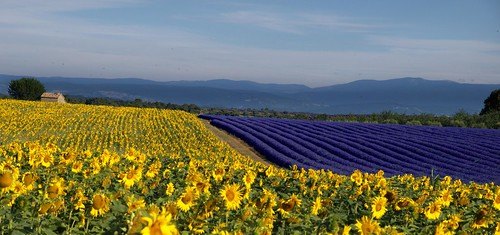france marseille plateau lavender olympus e3 provence lavande tournesol valensole platinumheartaward flickrbronzetrophygroup