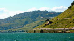Lavaux in the sunshine