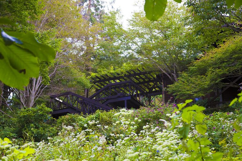 六甲ガーデンテラス・植物園91