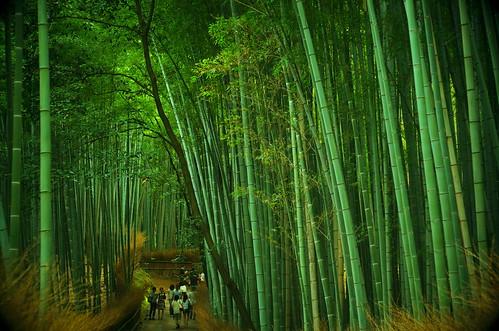 japan forest pentax bamboo arashiyama k50 smcpentaxa50mm17 trotaparamos