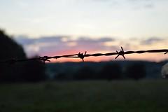 Sharp Sunset!