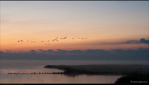 mist birds fog sunrise nederland vogels nl noordholland markermeer zonsopkomst schardam peterbijkerkeu