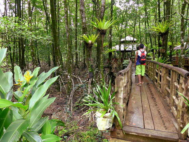 Path going to the Mangrove Forest.