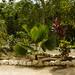 Around the Cenote 1