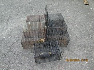 賴姓嫌犯獵捕食蛇龜現場所使用之七具捕鼠籠(圖:屏東林管處)