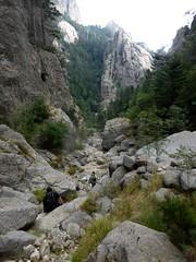 Descente de la Purcaraccia : dans le lit du ruisseau après la 1ère confluence et le coude à gauche vers la confluence Purcaraccia/Nura