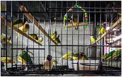 Aves. Mercado central de Belo Horizonte