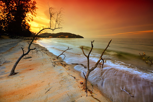 trees sunset sea sky sun tree beach nature water sunrise dead landscapes nikon waves seascapes sigma deadtree sigma1020mm sigma1020 singhray leefilter d7100 reversegnd nikond7100