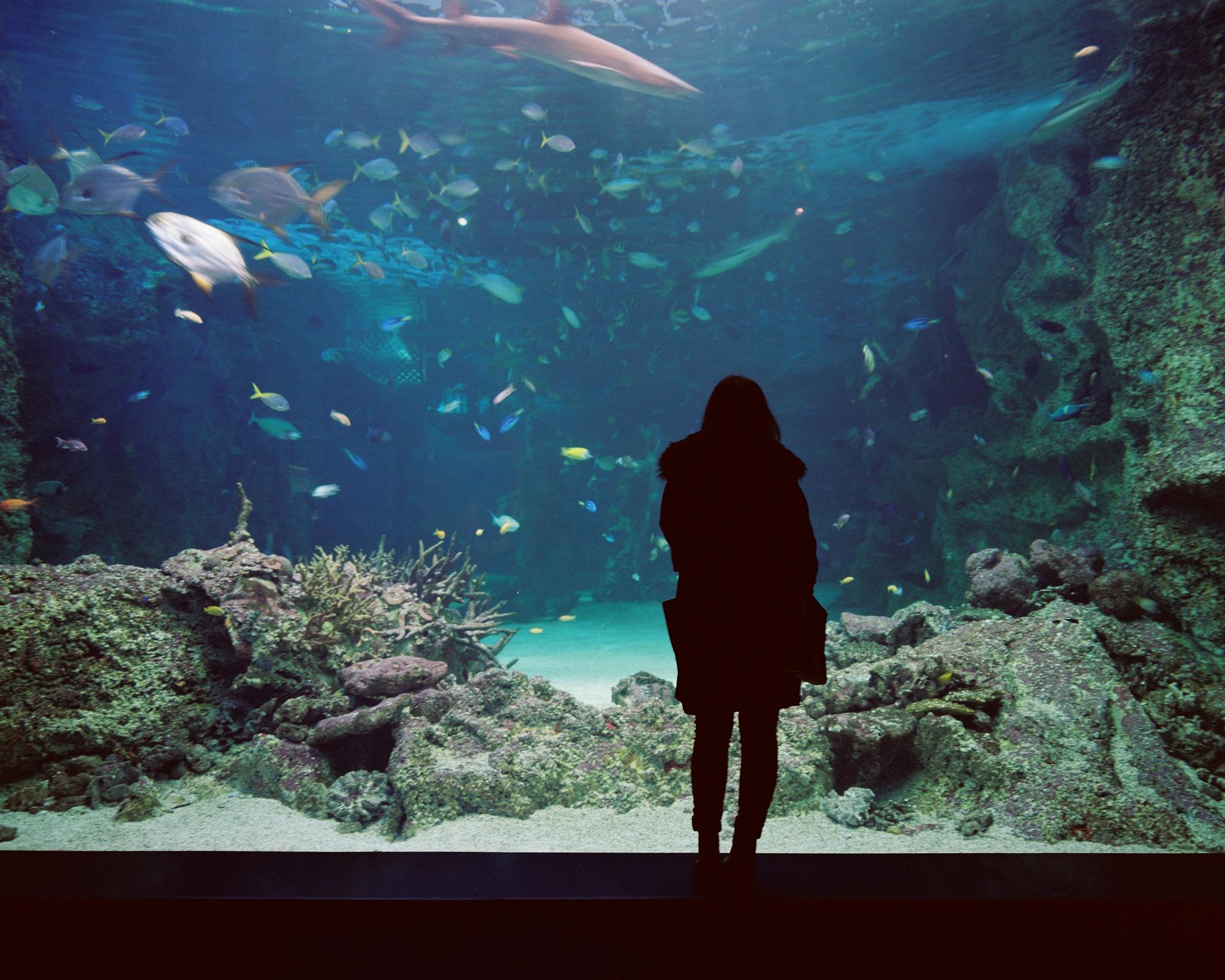 Sydney Aquarium ii