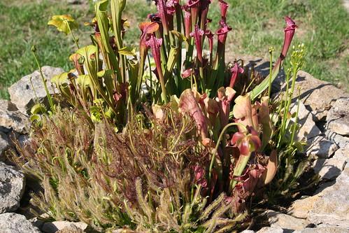 plantes2014 091