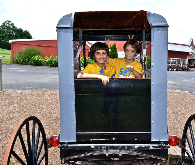 my cuties - buggy - Amish Tour - Lancaster County PA